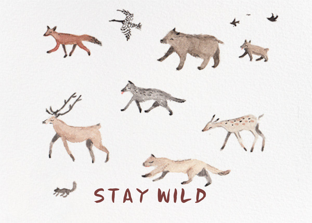 Stay Wild (Sarah Burwash) - Red Cap Cards - Birthday cards for him