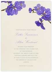 Moth Orchid - Purple