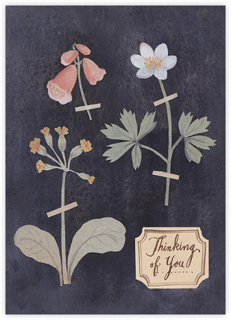 Pressed Flowers (Kelsey Garrity Riley) - Red Cap Cards - Just because cards