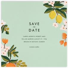 Citrus Orchard Suite (Save the Date) - Mint