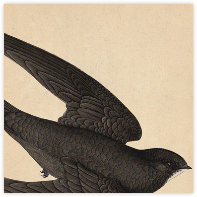 Swallow - John Derian - Dinner Party Invitations